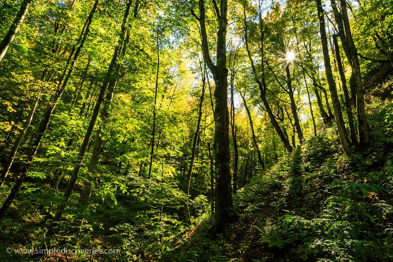 croatia_trees_plitvice_lakes