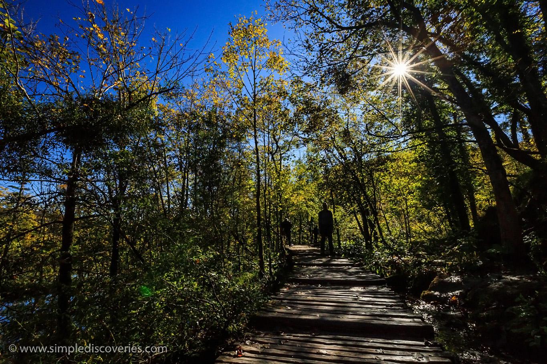 croatia_trees_of_plitvice_lakes