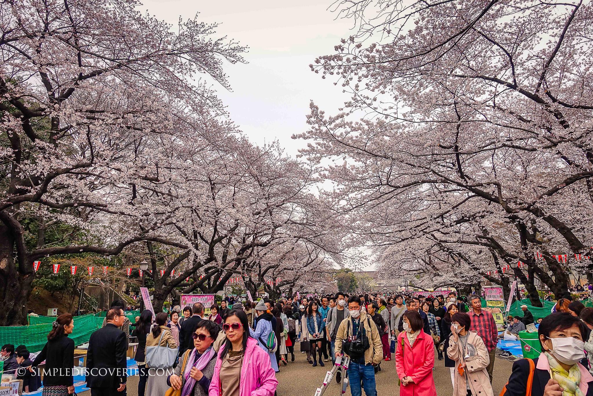 uneo_park_blossom_crowds_japan