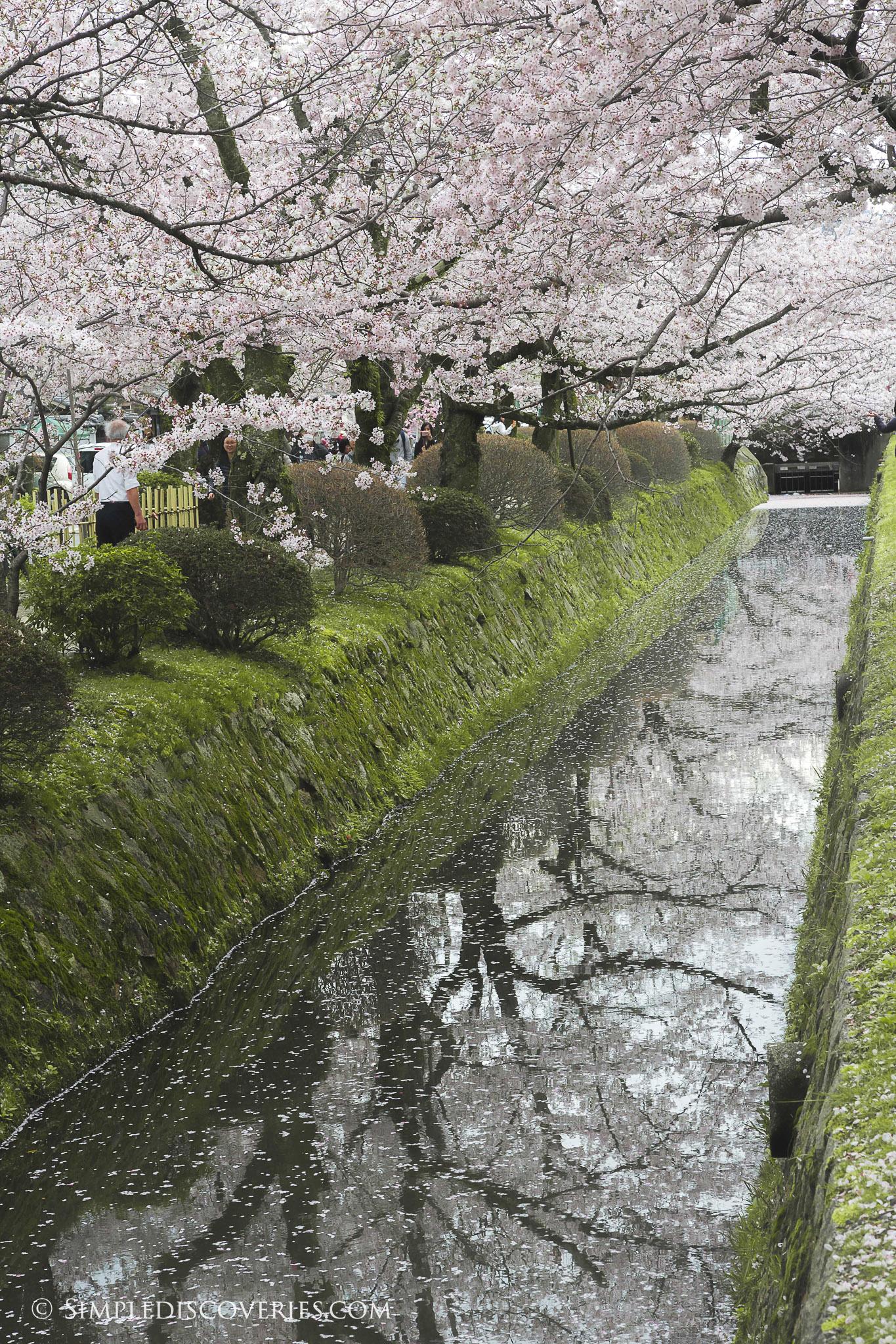 Shirakawa_Dori_Japan