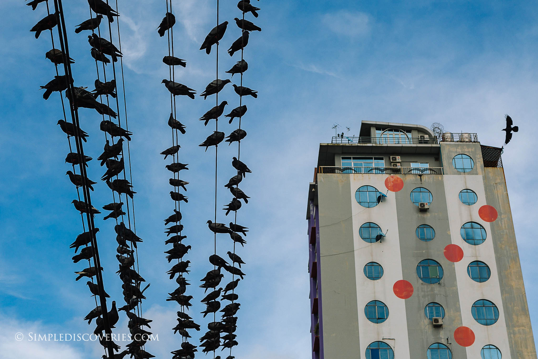 birds_in_yangon_myanmar