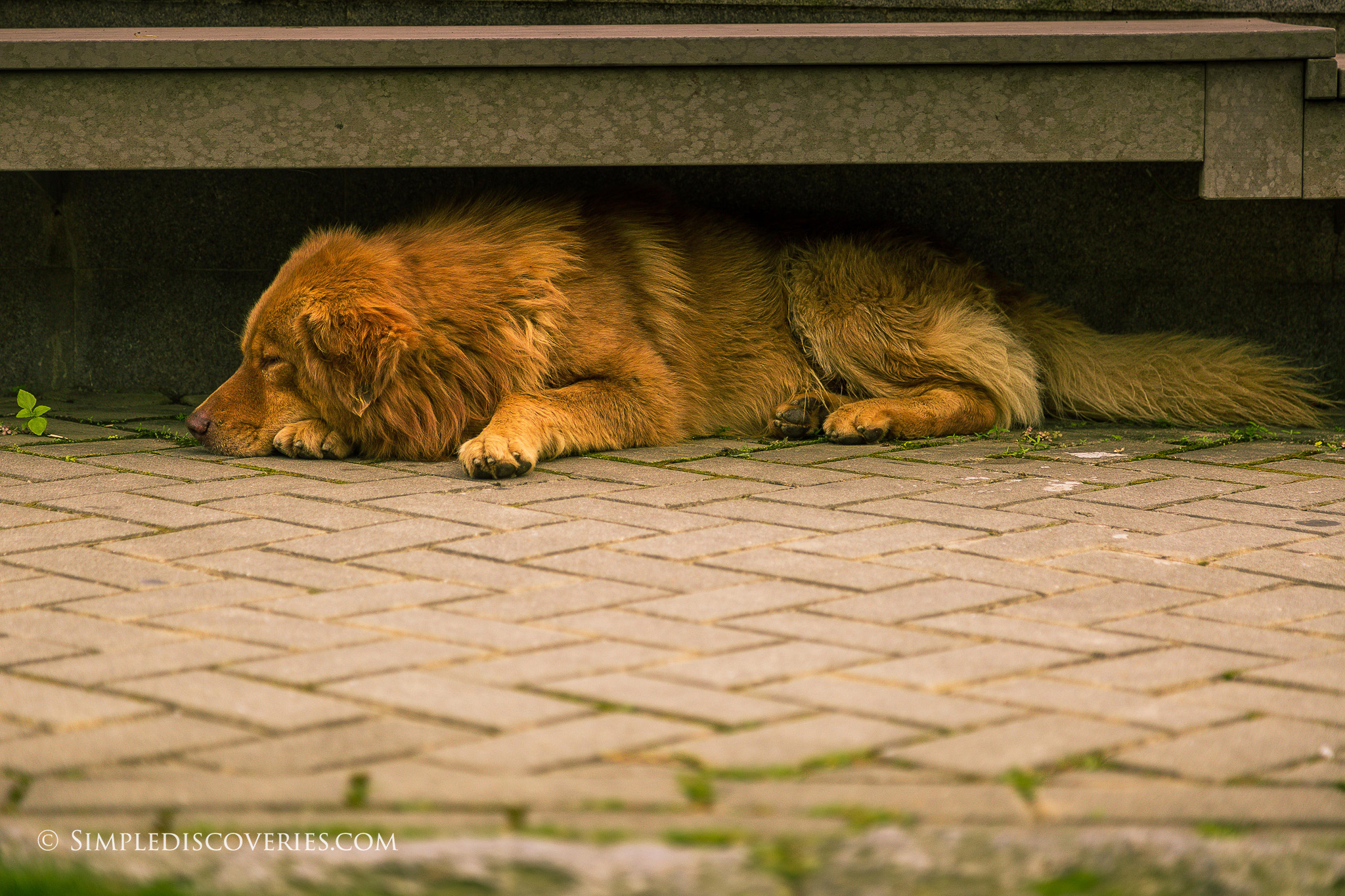 sleeping_dog_hong_kong