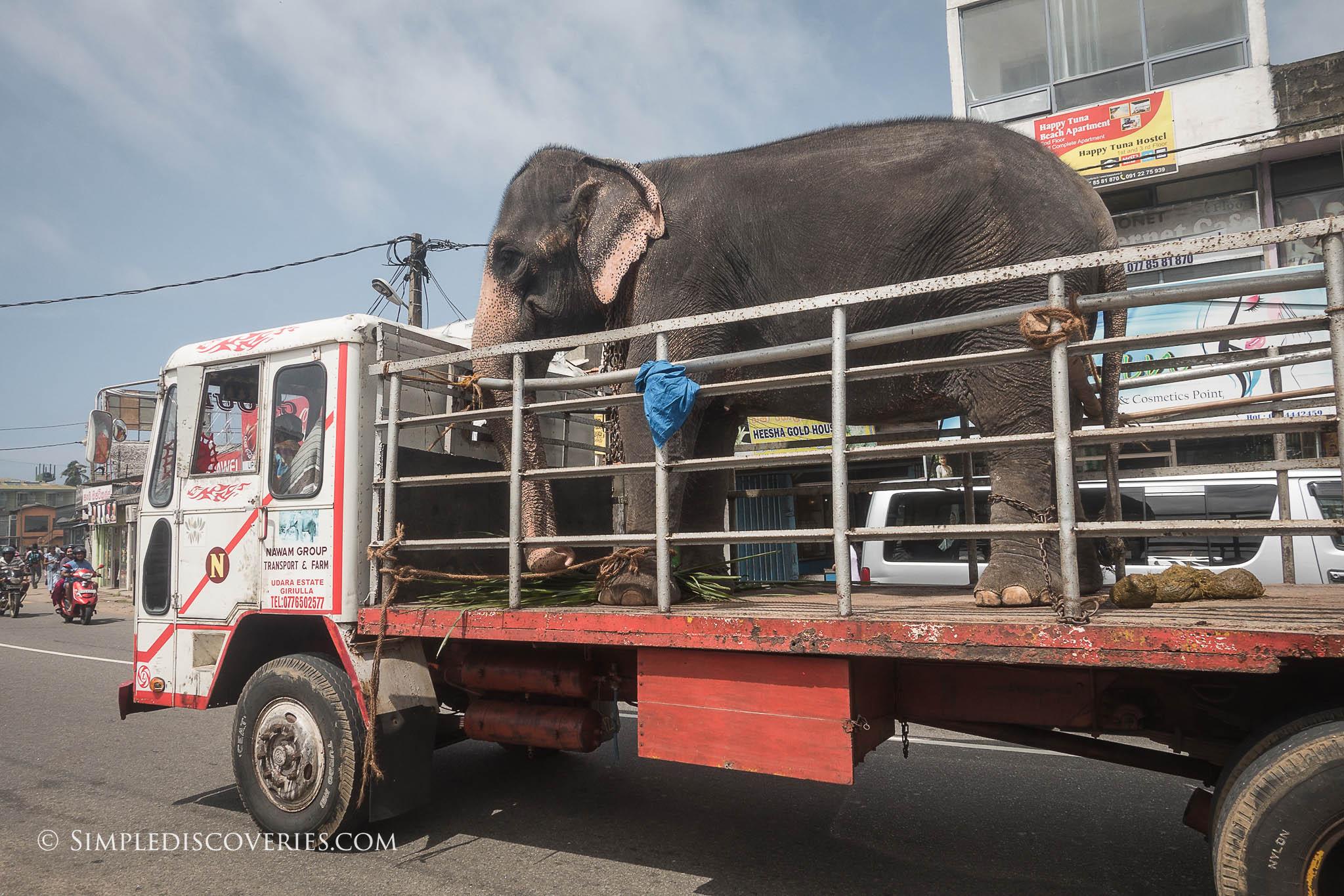 Elephant_in_Truck_SriLanka