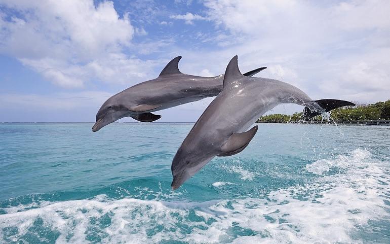 Сон дельфин в воде