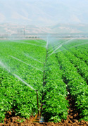sustainable farming, crops grown without chemicals