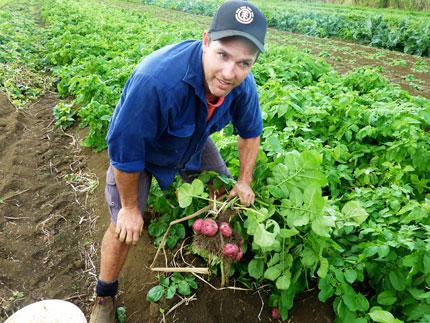 potatoes grown using biological farming