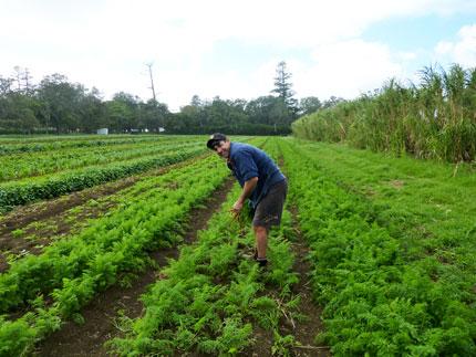 carrots grown using biological farming