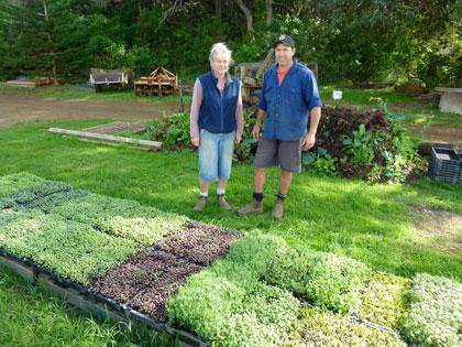 biological farming greens