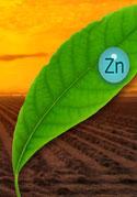 zinc-life