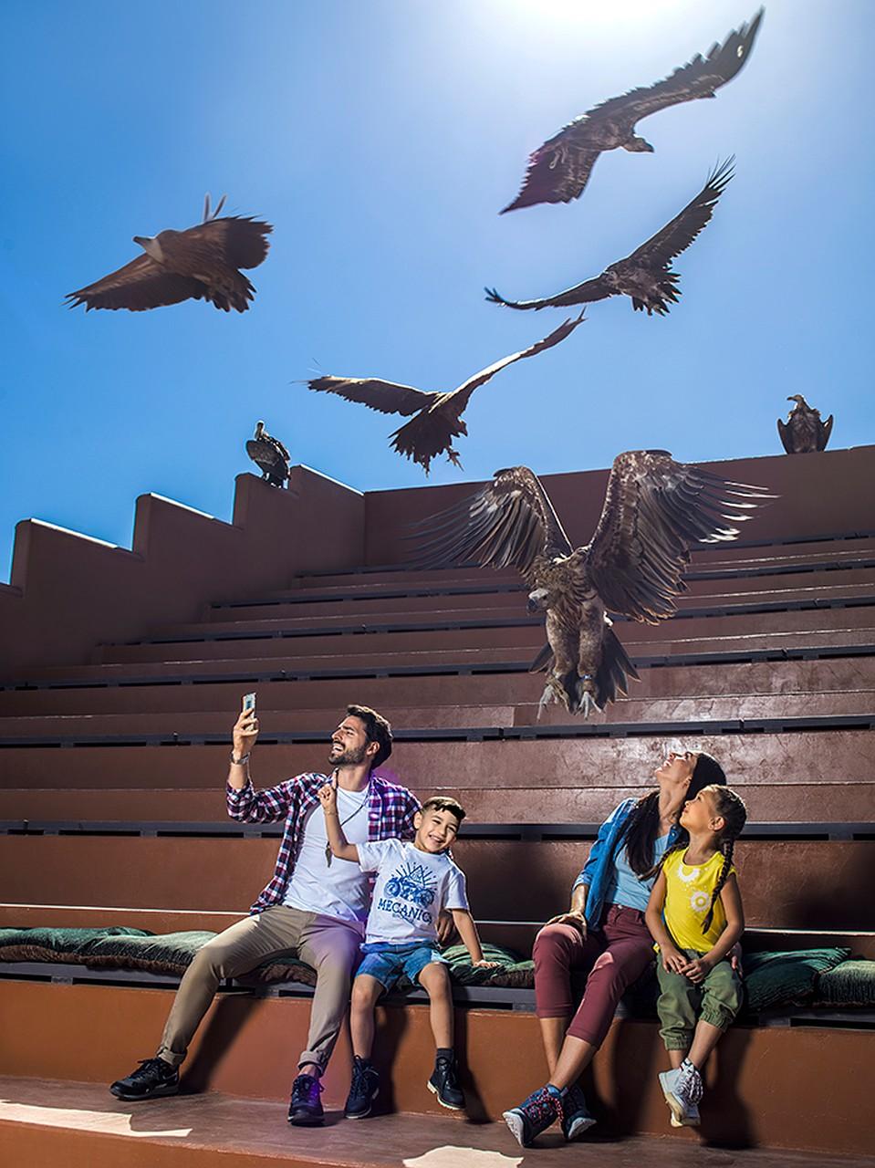 Шоу хищных птиц никого не оставит равнодушным Фото: предоставлено организаторами