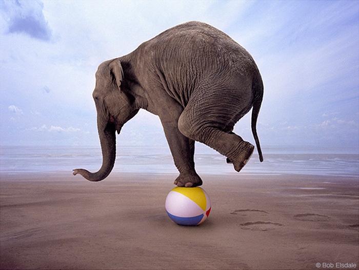 Сколько весит один слон