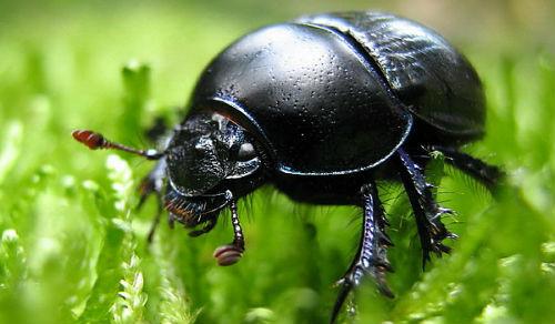 Во сне черные жуки