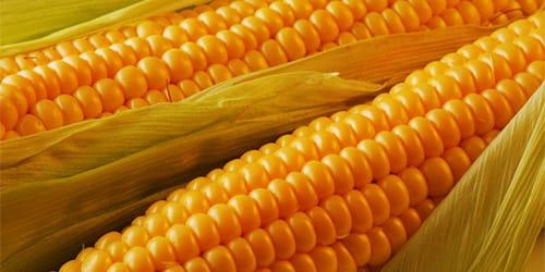 Сонник початки кукурузы