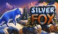 Игровые автоматы Silver Fox играть бесплатно