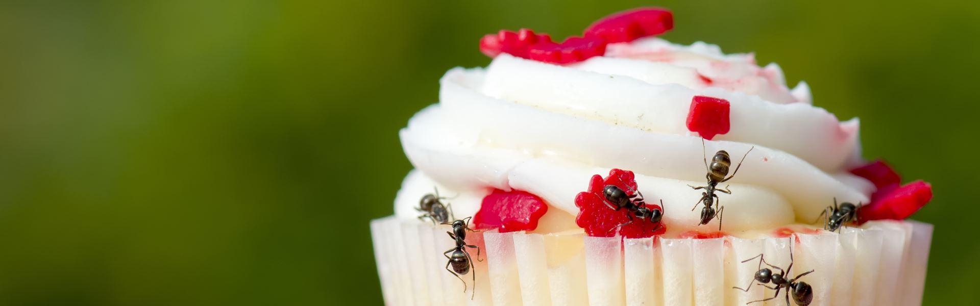 Борьба с домашними муравьями дома