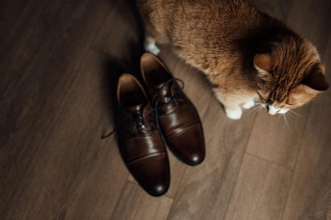 Вывести запах кошачьей мочи из обуви