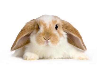 Celebrities with pet rabbits