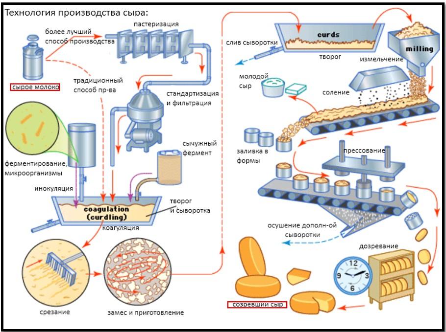 Домашнее производство сыра