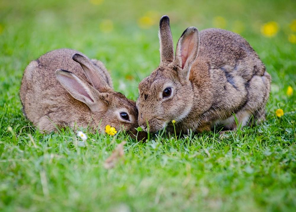 Бизнес план разведение кроликов с расчетами