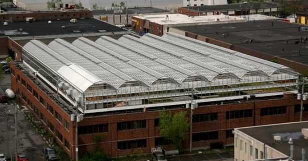 Идеи для малого бизнеса: теплицы на крышах