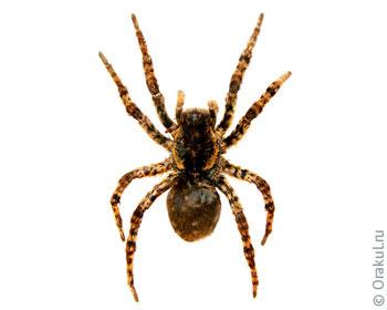 К чему снится золотой паук
