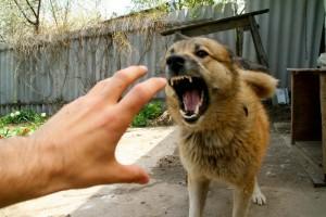 Прививки после укуса собаки