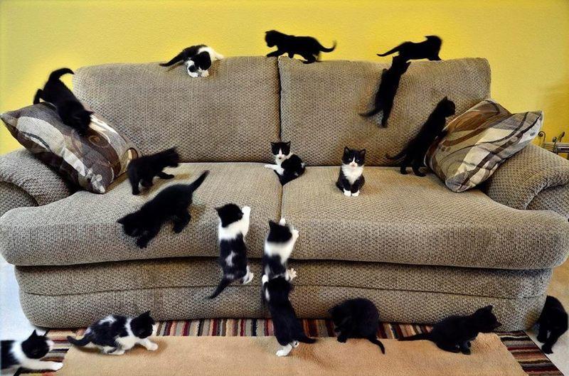 Как вывести кошачью мочу с дивана