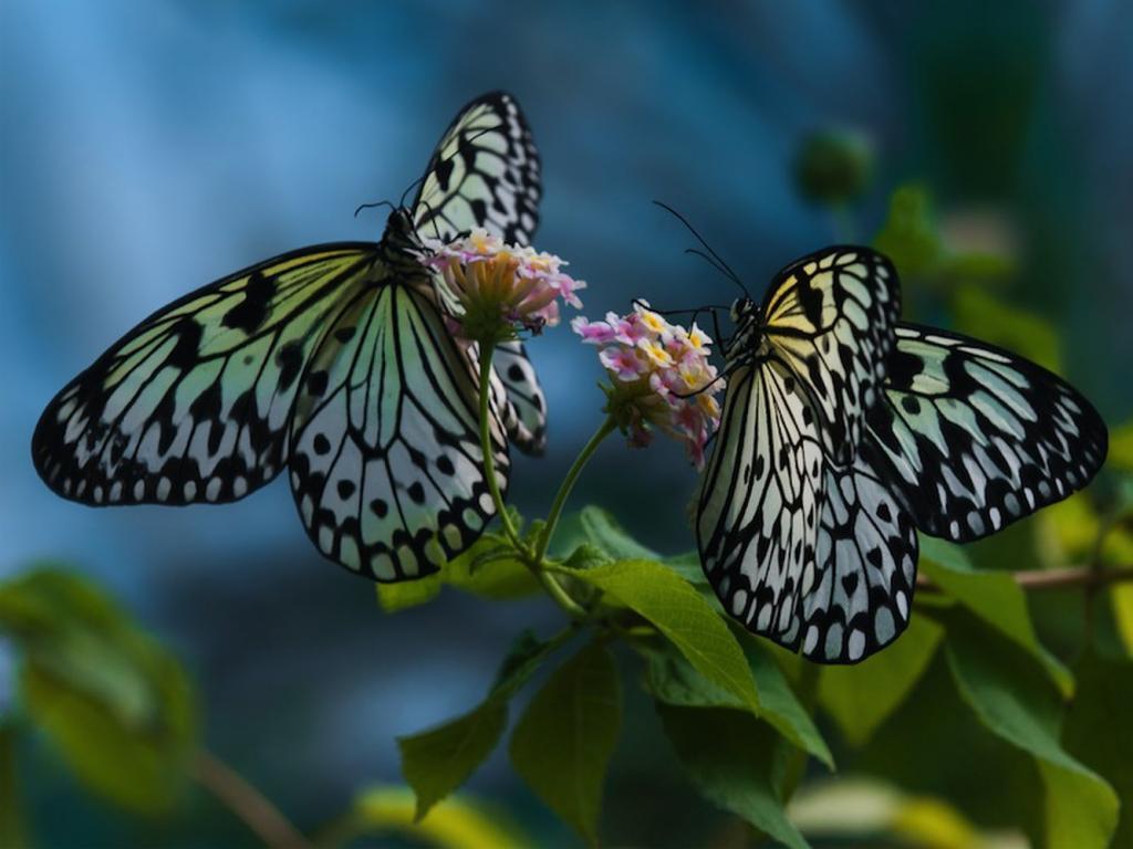 Видеть много бабочек во сне