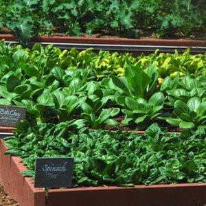 Выгодно ли выращивать зелень на продажу