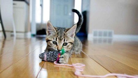 Что можно сделать для кошки