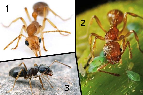Как избавиться от домашних муравьев быстро и навсегда