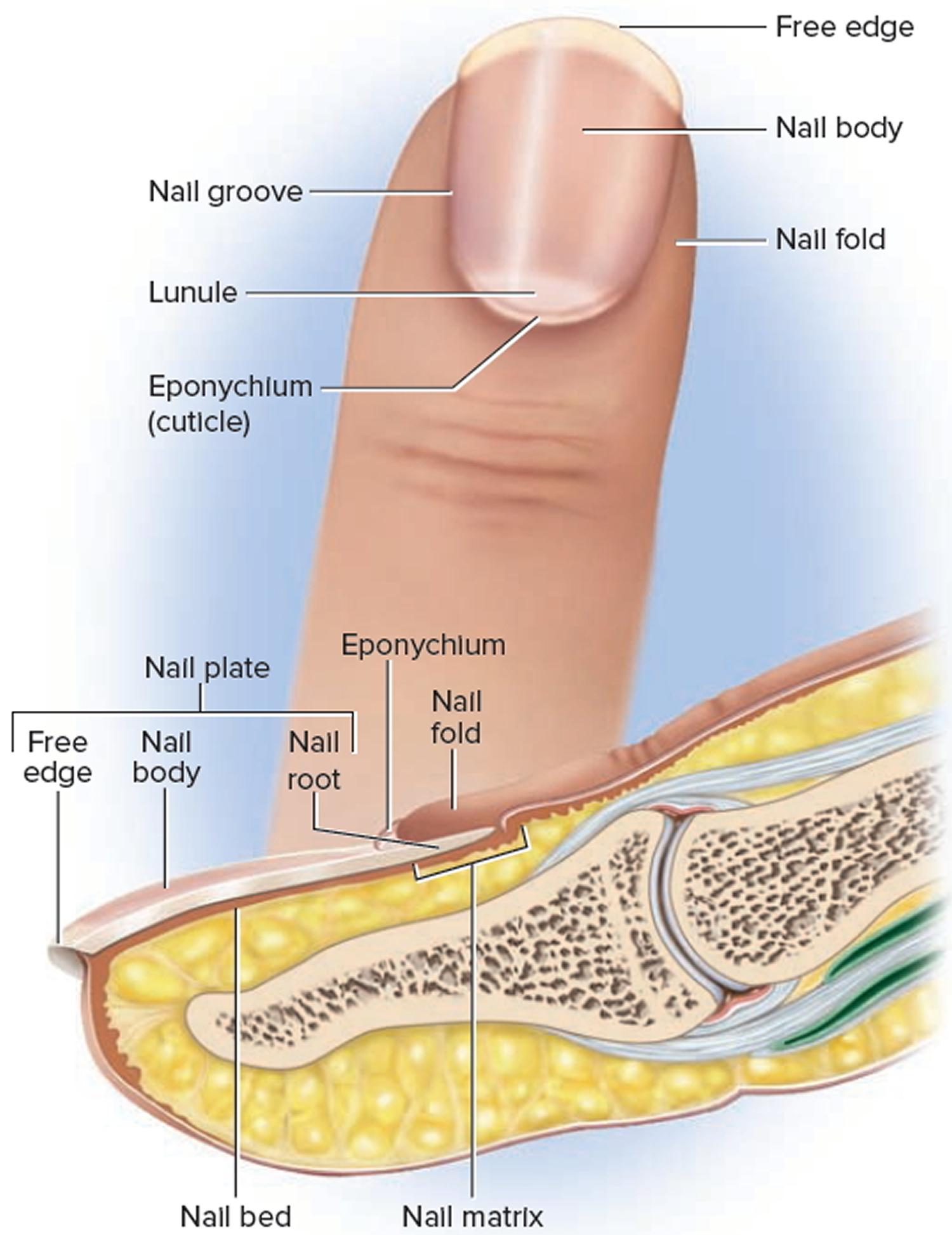 Onychomycosis of the fingernails