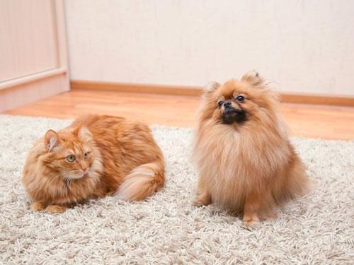Кошка и собака дома