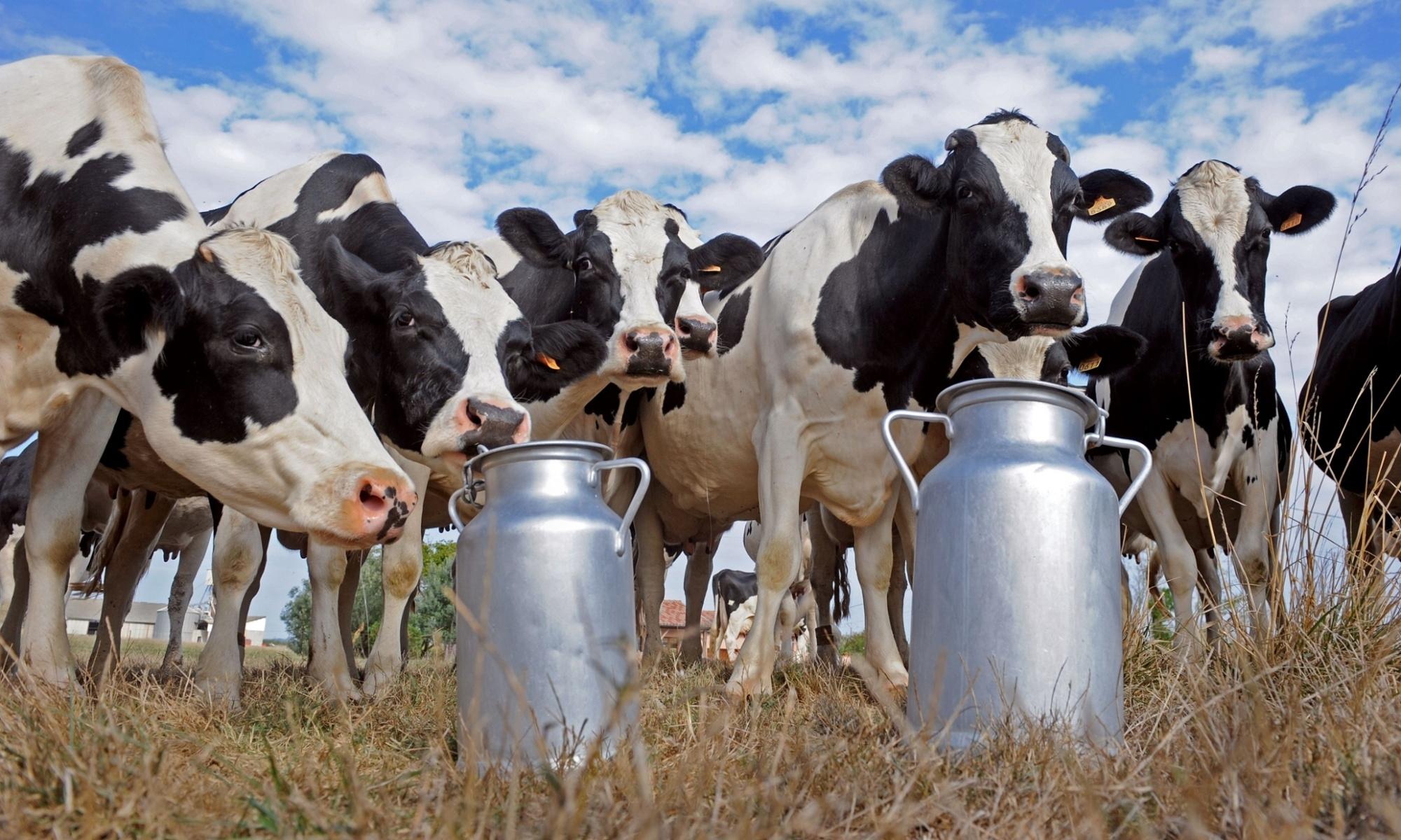 Реализация фермерского молока