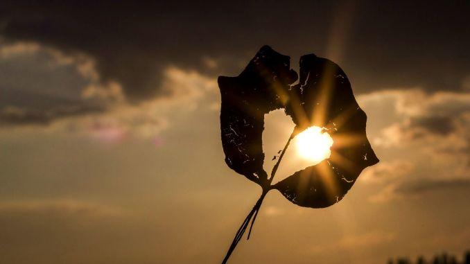 list ve tvaru srdce při západu slunce