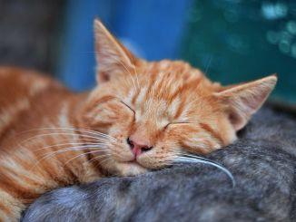 Spící kočka