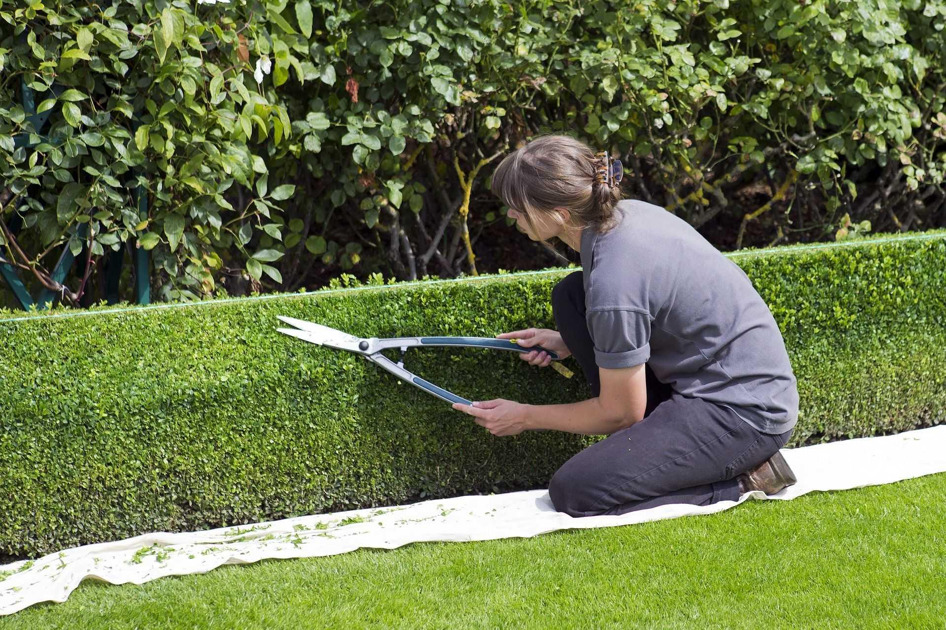zahradničení je způsob jak léčit stres a deprese