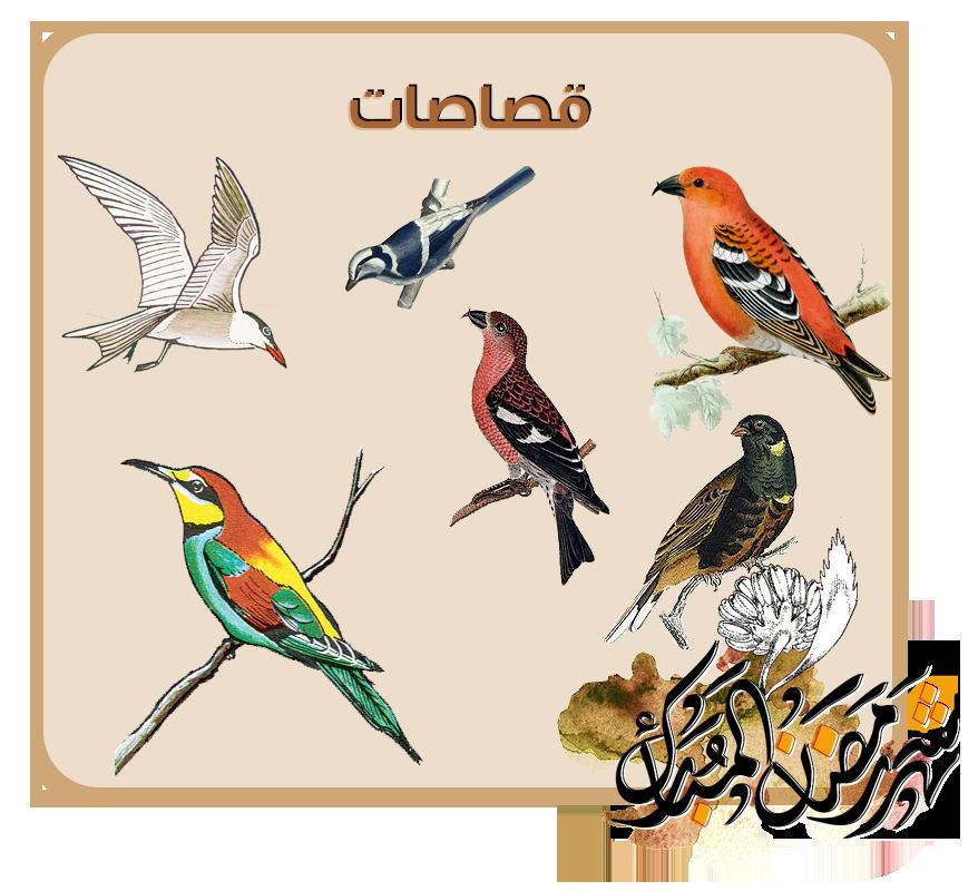 """رَمضَانيَّــاتْ """"مجموعَة منوّعة """" png-birds.png"""