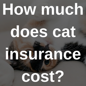 how much does cat insurance cost?