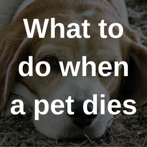 what to do when a pet dies