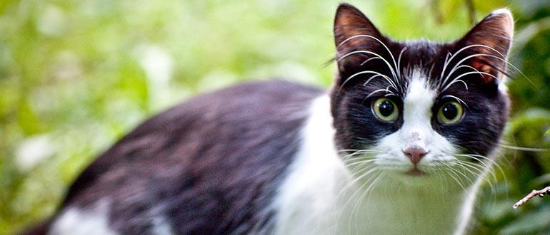 Как вывести у кошки блох народные средства