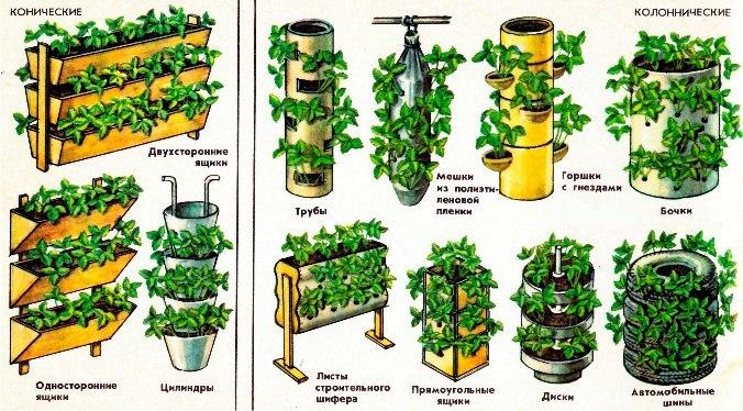 Бизнес выращивание на дому