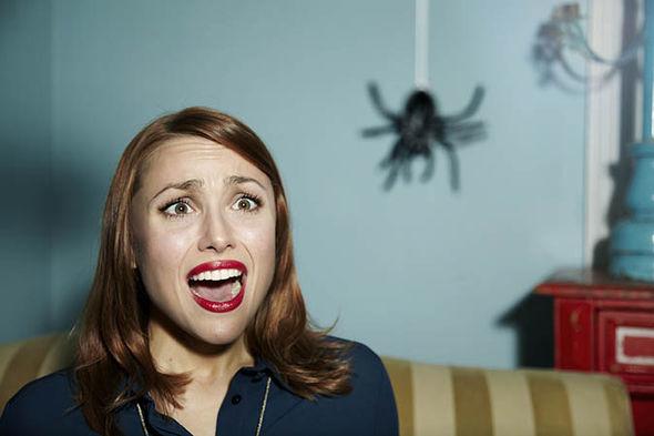 паук в комнате приметы