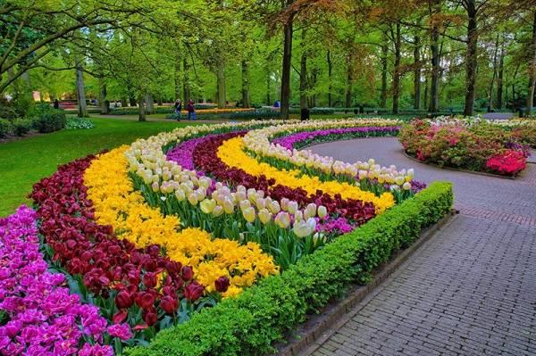 Когда в москве сажать тюльпаны