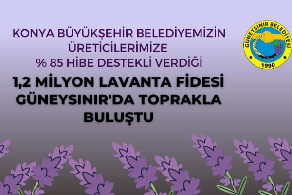 GÜNEYSINIR'DA LAVANTA DİKİM ZAMANI
