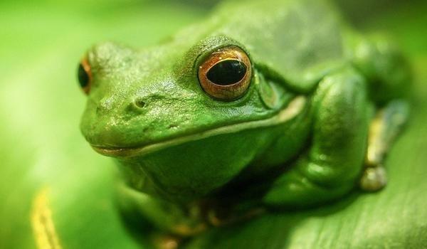 К чему снится жабы женщине