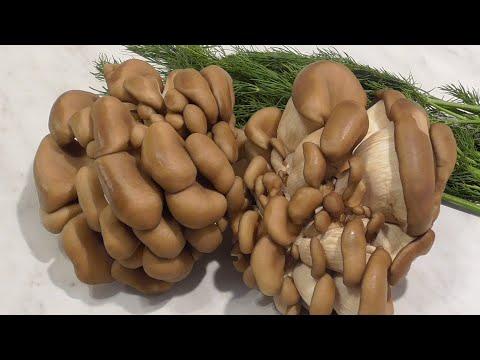 Stand Up: Алексей Щербаков - Огромная жирная баба