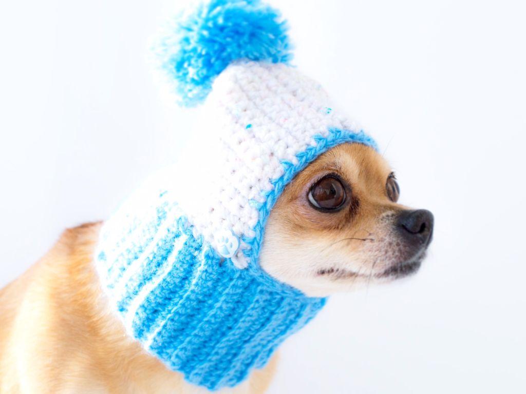 Шапочка для собаки вязаная