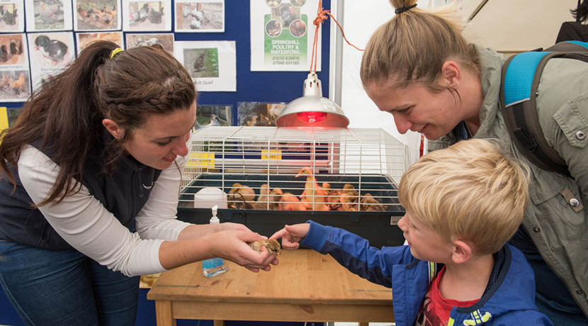 Expanded Education Hub for Newport Show