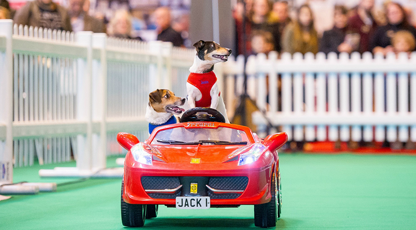 Save 20% on tickets* to The National Pet Show at The NEC